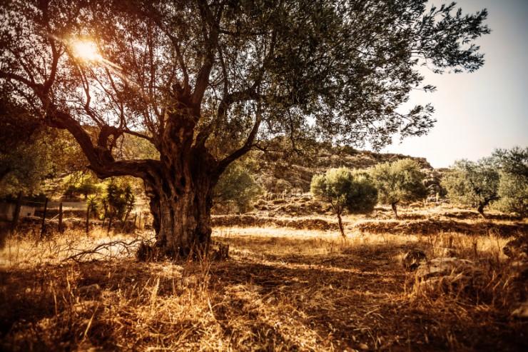 Les secrets de longévité d'Ikaria